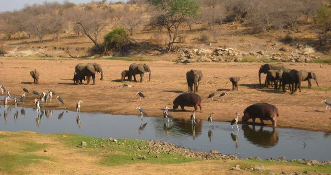 Ruaha National Park Oasis Travel