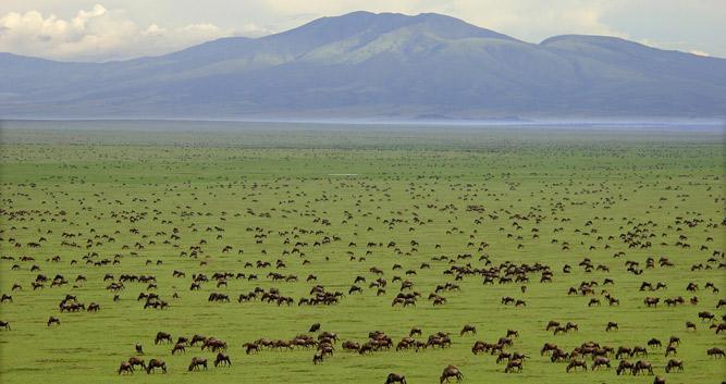 Serengeti National Park Oasis Travel
