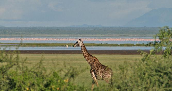 Lake Manyara National Park Oasis Travel