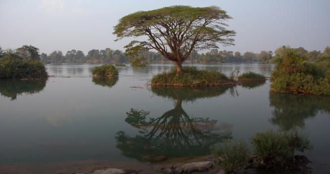 Trees in the water, 4000 islands, Laos