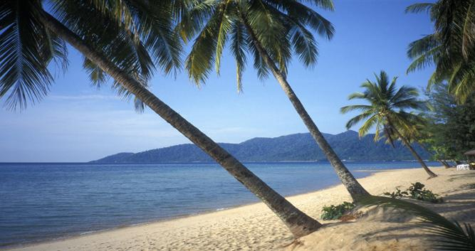 Palm trees fringing the beach, Tioman Island, Malaysia