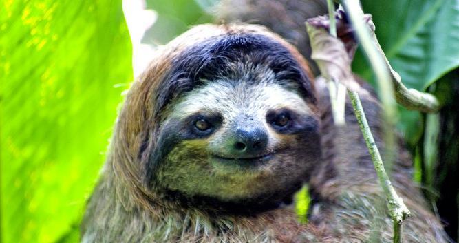The sloth sanctuary close to Puerto Viejo, Costa Rica
