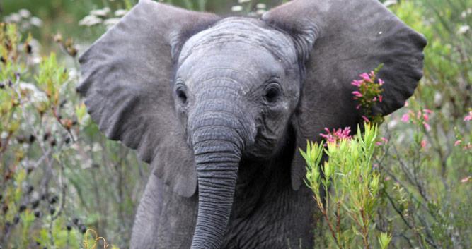 Copyright Gondwana Private Game Reserve