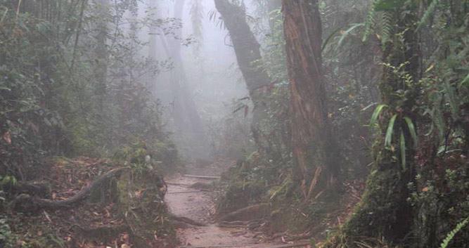 Jungle trekking trails, Danum Valley, Borneo