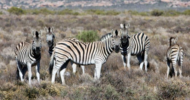 Kagga Kamma Nature Reserve