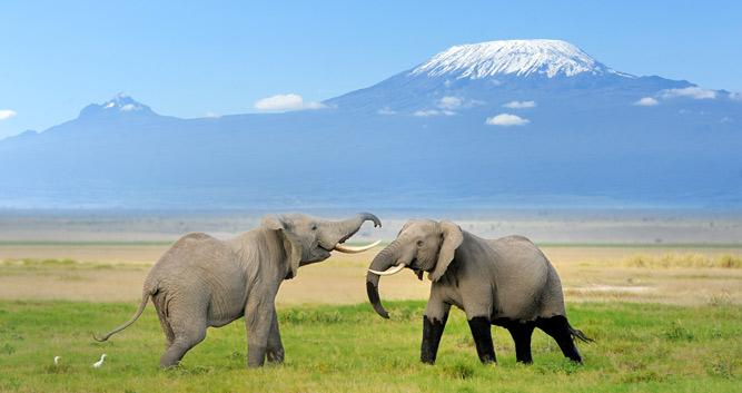 Mount Kilimanjaro National Park Oasis Travel