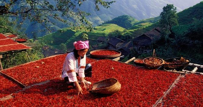 Longsheng, drying chilies near Guilin, in China Luxury Travel