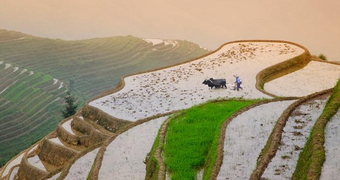 Longsheng, spectacular view to rice fields 2, in China Luxury Travel