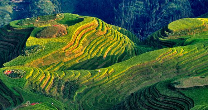 Longsheng, spectacular view to rice fields, in China Luxury Travel