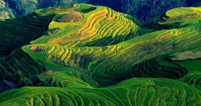Dragons Backbone Rice Terraces, Guilin, China