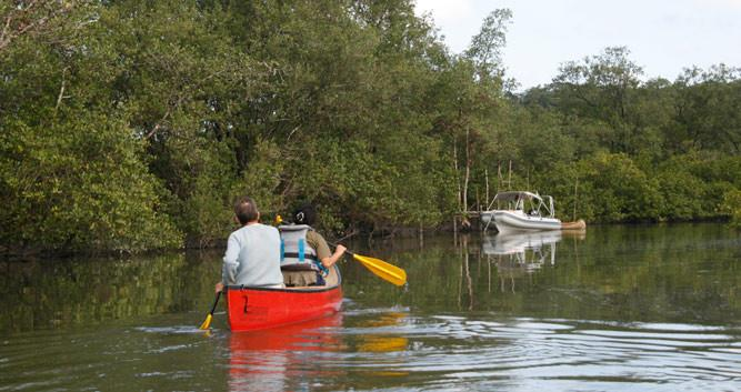 Paddling the mangrove channels of Tortuguero, Costa Rica