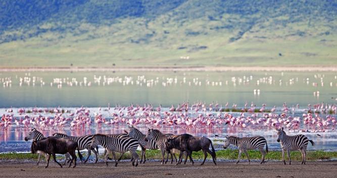 The Ngorongoro Crater Oasis Travel