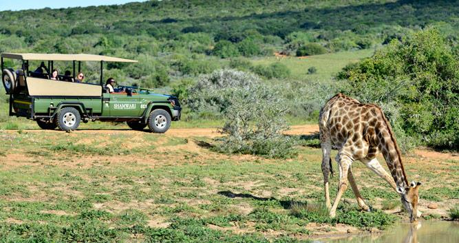 Copyright Shamwari Private Game Reserve