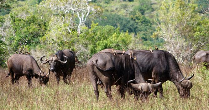 Shimba Hills National Park