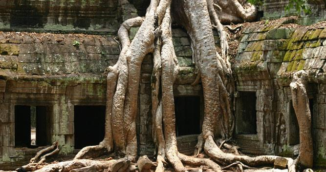 Ta Prohm, tombraider temple, Angkor, Siem Reap, Cambodia