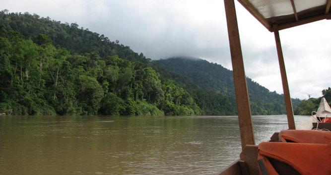 Rainforest view from the river, Taman Negara National Park, Malaysia