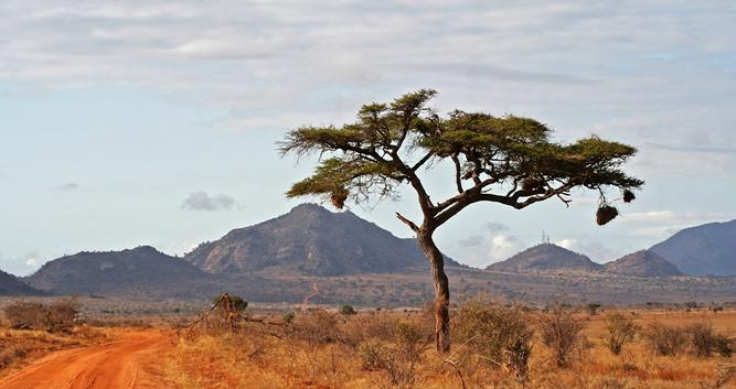 East & West Tsavo National Parks