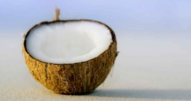 Coconut on the beach, The Maldives, Indian Ocean