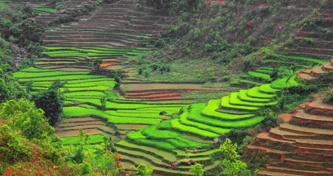 rice-paddy-Tansen-Luxury_Nepal_Holiday_Experts