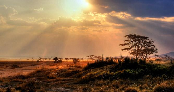 Serengeti National Park Oasis Travel