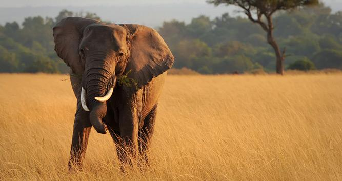 Masai Mara National Park