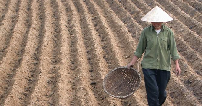 Working the crops, rural Vietnam