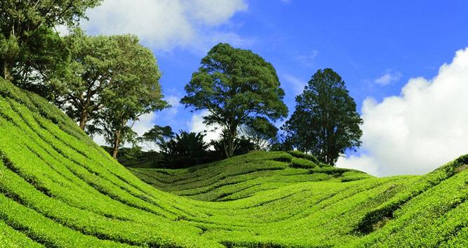 Rolling hills in the Cameron Highlands, Malaysia