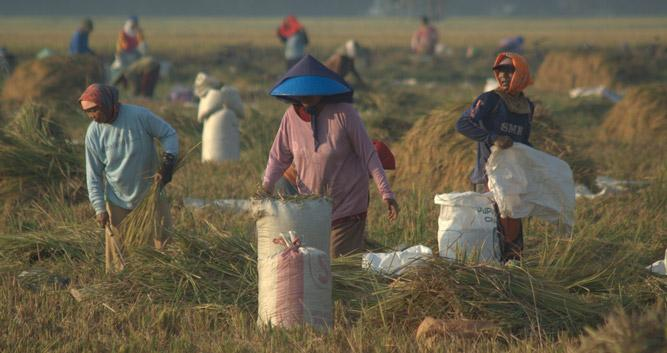 Farming the fields, rural Vietnam