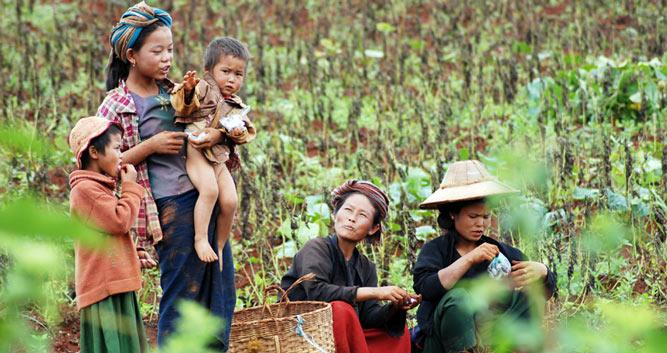 Local villagers, working the crops, Burma