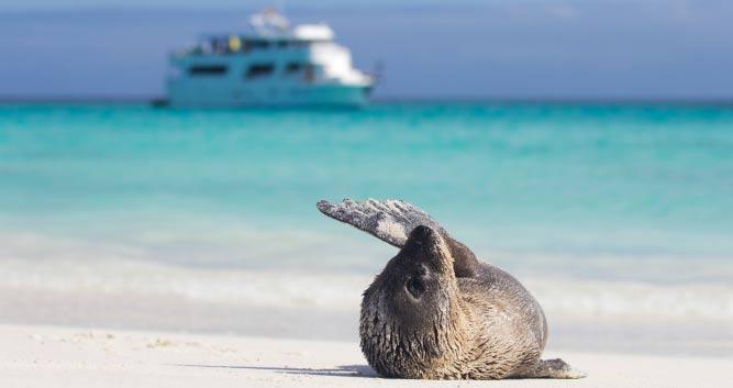 seal on beach, Galapagos Islands, Ecuador