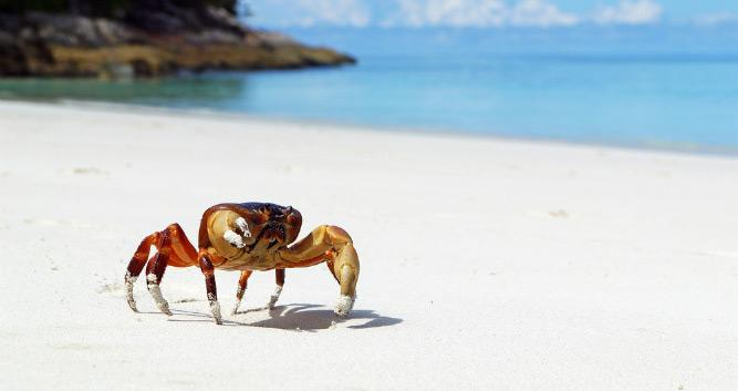 Crab walking on deserted beach, Galapagos Islands, Ecuador