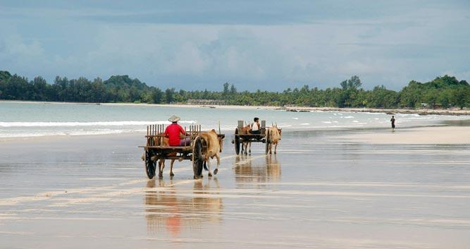 Bullock carts on the beach, Burma