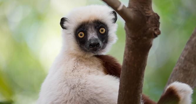 Madagascar Oasis Travel