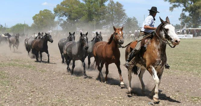 Gauchos, The Pampas, Argentina, South America